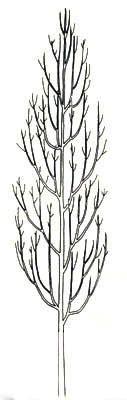 arboristes grimpeurs bernay 27 lagage arbre 76 vital arbre. Black Bedroom Furniture Sets. Home Design Ideas