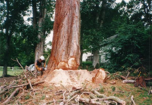 abattage arbre demontage tarif abattage arbre. Black Bedroom Furniture Sets. Home Design Ideas
