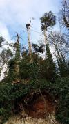 Démontage de pins